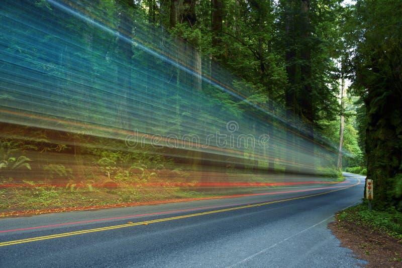 Forest Traffic foto de stock royalty free
