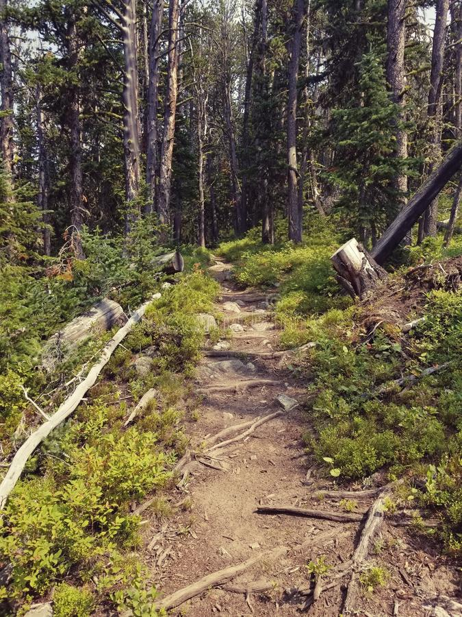 Forest Trail royalty-vrije stock afbeeldingen