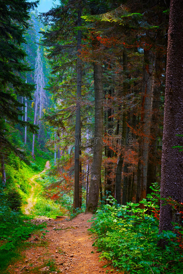 Download Forest trail stock photo. Image of autumn, park, forest - 28171886