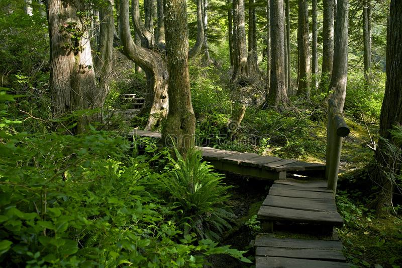Forest Trail fotografía de archivo