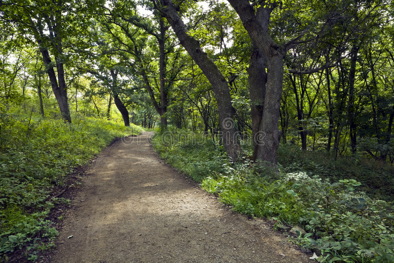 Forest Trail. Nature trail winds through the Konza Prairie Preserve in the Flint Hills of Kansas royalty free stock photos