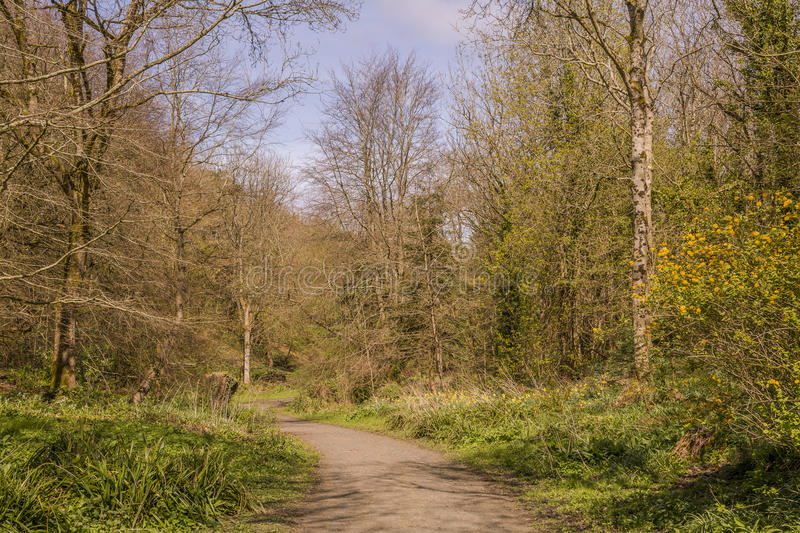 The Forest trail royalty free stock photos