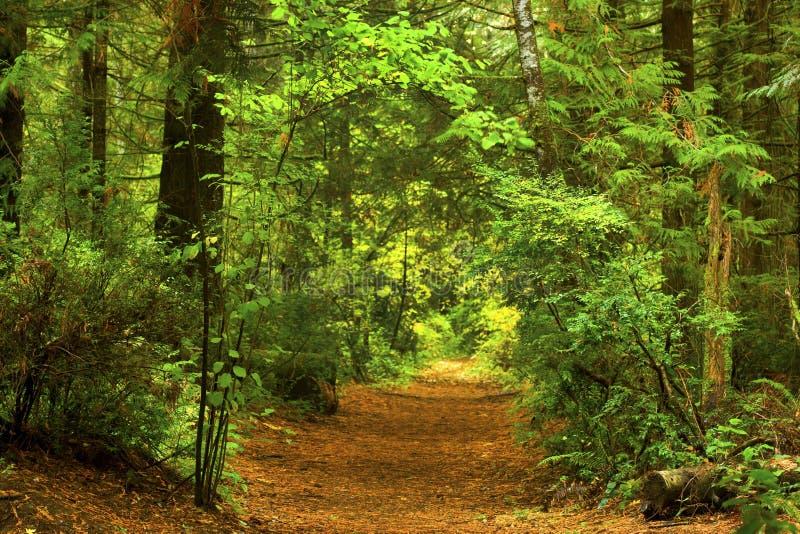 Forest Trail del noroeste pacífico fotos de archivo