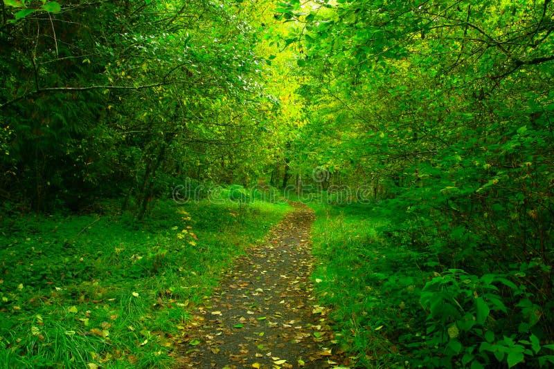Forest Trail del noroeste pacífico foto de archivo