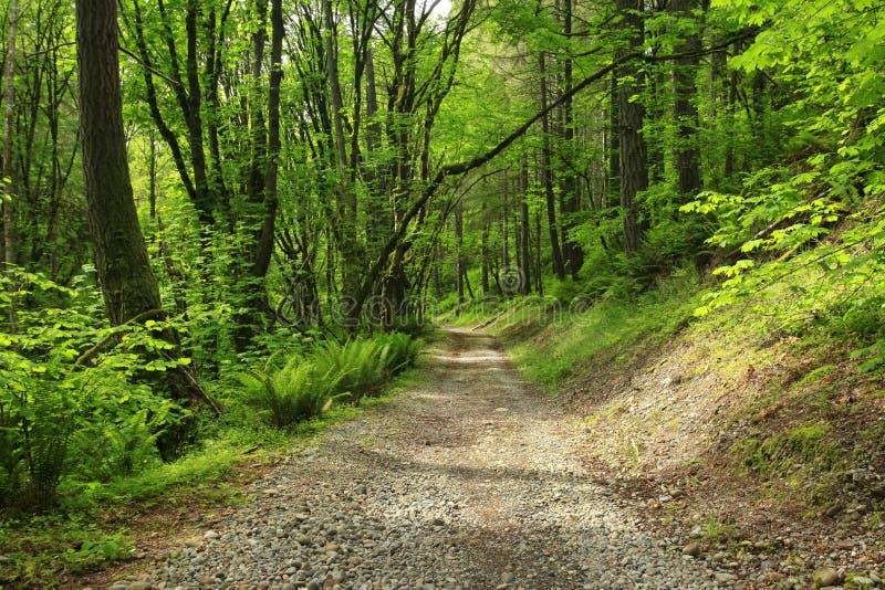 Forest Trail del noroeste pacífico imagen de archivo libre de regalías