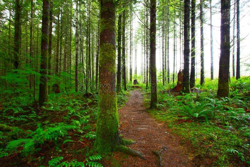 Forest Trail del noroeste pacífico imagenes de archivo