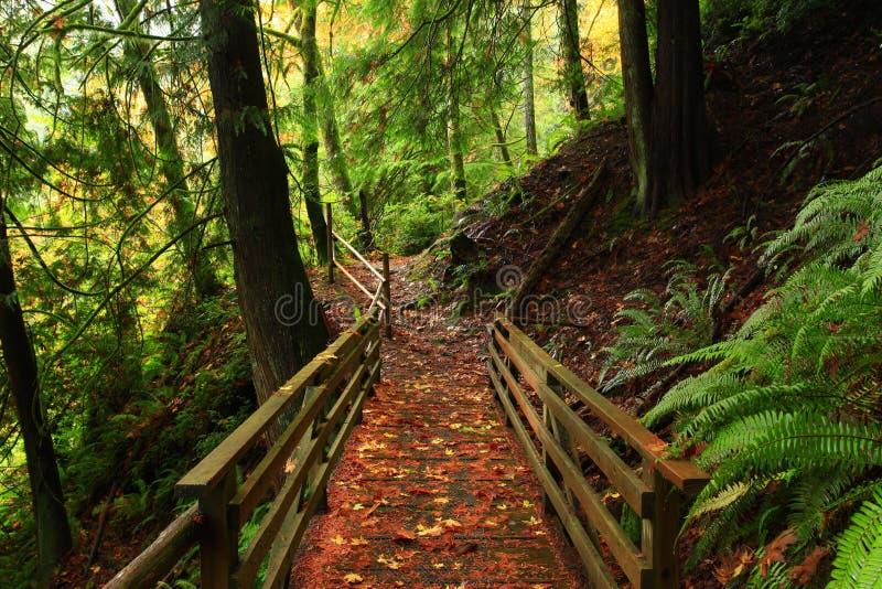 Forest Trail di nord-ovest pacifico fotografia stock