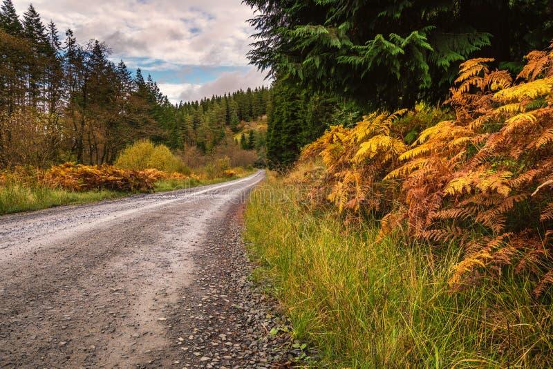Forest Trail en el parque de Kielder fotografía de archivo
