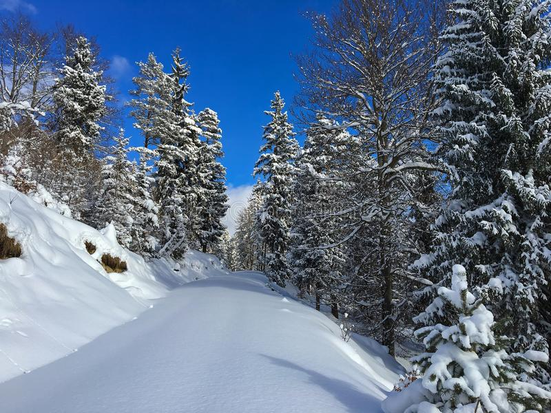 Forest trail, hiking path covered with smooth thick snow in sunny winter day with mountain and blue sky background. Austria. royalty free stock photos