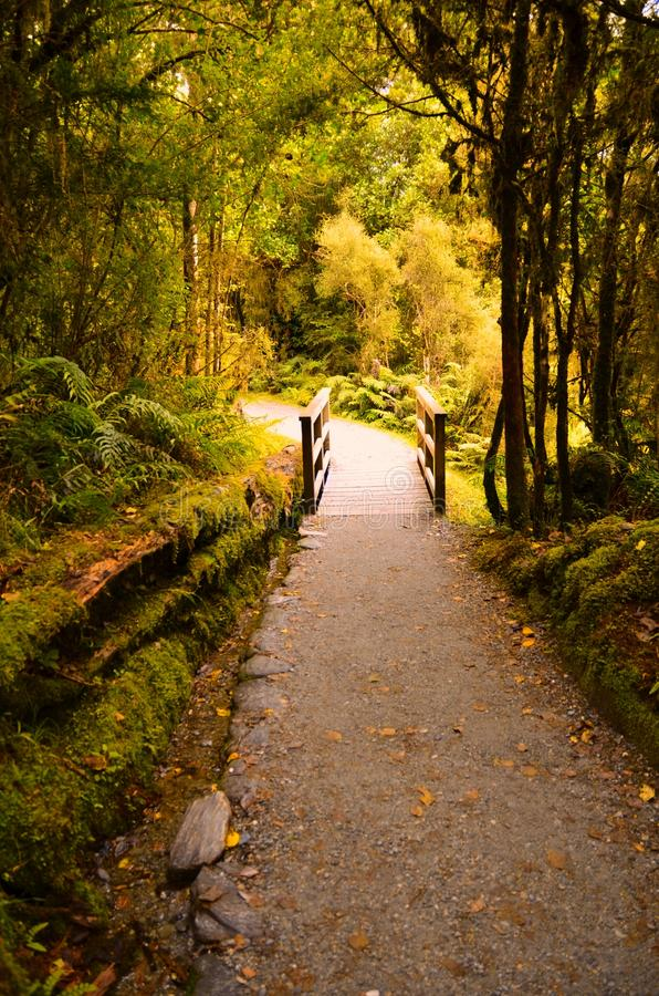 Forest Trail, Lake Matheson, New Zealand stock photography