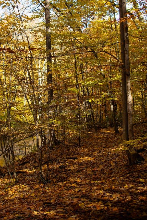 Forest Trail a lo largo de la corriente con las hojas anaranjadas de la caída fotos de archivo libres de regalías