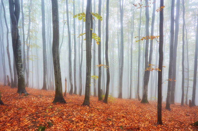 Forest trail in the mountains on autumn day. stock images