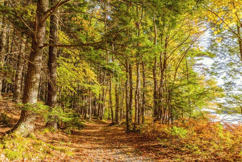 Forest Trail nella caduta fotografia stock libera da diritti
