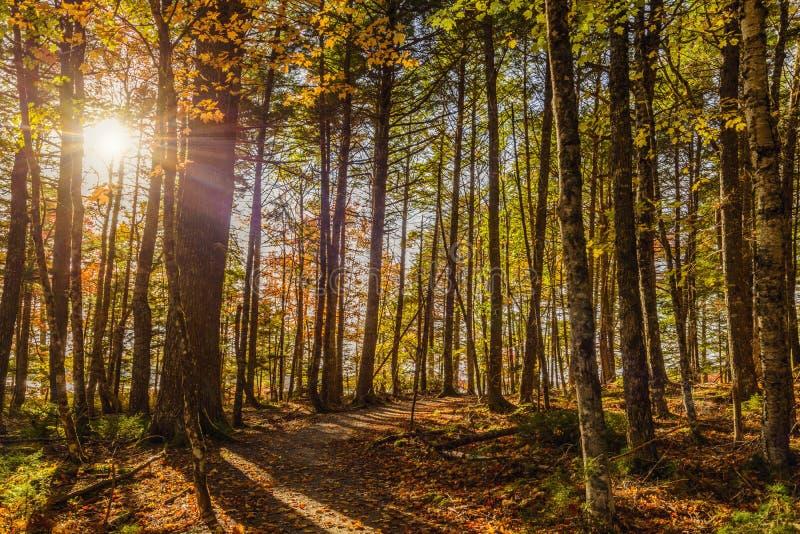 Forest Trail nella caduta immagine stock libera da diritti