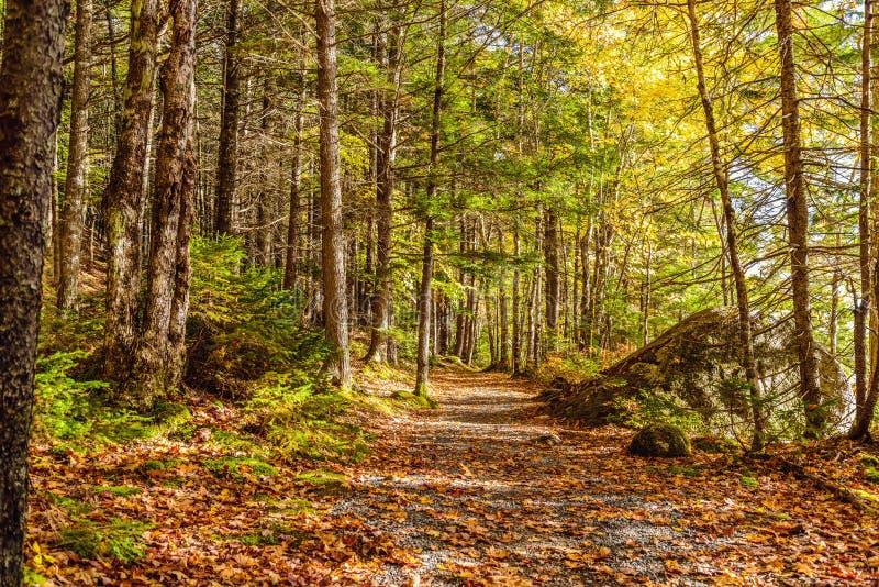 Forest Trail nella caduta immagine stock
