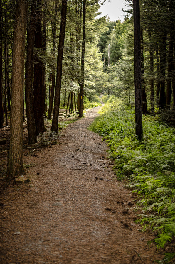Forest trail. A trail or path in a dense forest stock images