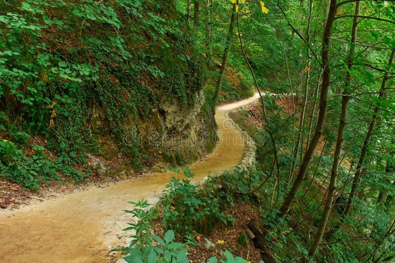 Forest Trail in Plitvice, Kroatië stock fotografie
