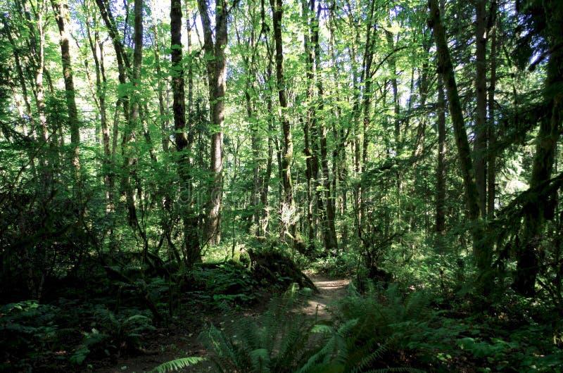 Forest Trail Portland, Oregon, USA royaltyfri fotografi