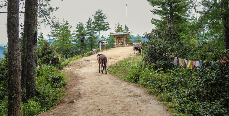 Forest trail to Taktshang Goemba. Horses on forest trail to Taktshang Goemba or Tiger Nest Monastery in Paro, Bhutan stock photo