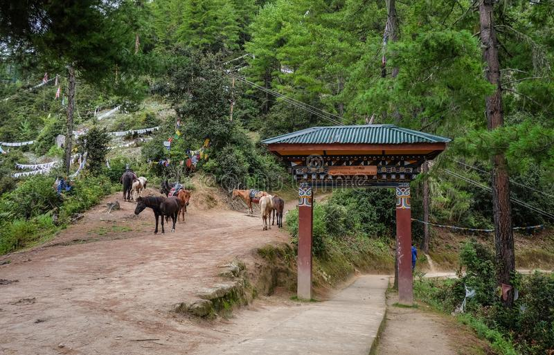 Forest trail to Taktshang Goemba. Horses on forest trail to Taktshang Goemba or Tiger Nest Monastery in Paro, Bhutan stock photography