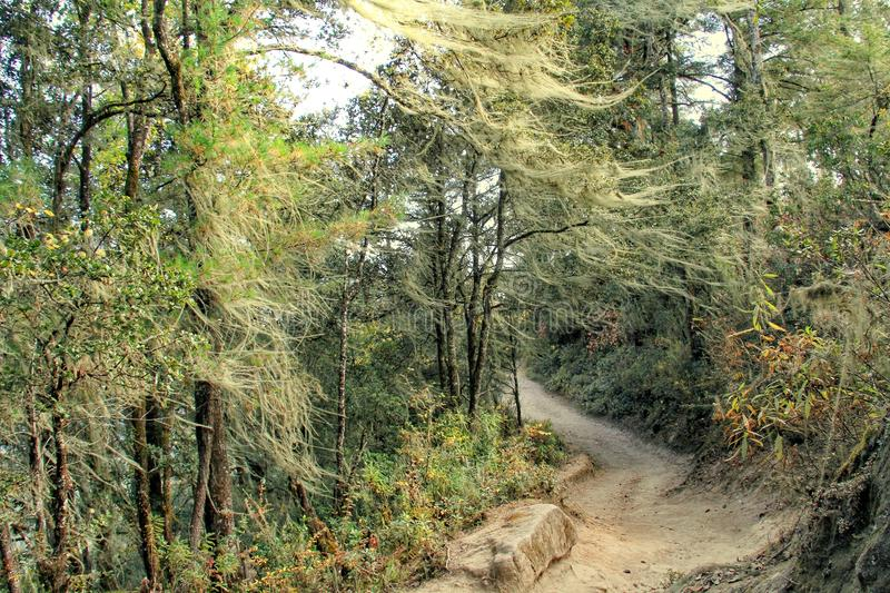 Forest trail to Taktshang Goemba or Tiger`s nest monastery, Paro. Bhutan royalty free stock image