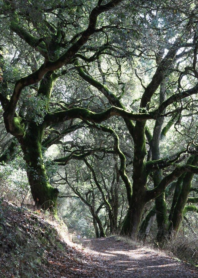 Forest Trail Under Oaks royalty-vrije stock afbeeldingen