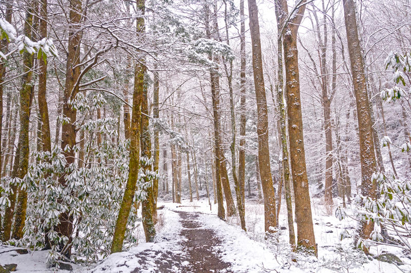 Forest Trail During une neige de ressort image stock