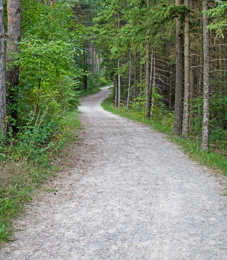 Forest Trail Into The Unknown fotografía de archivo