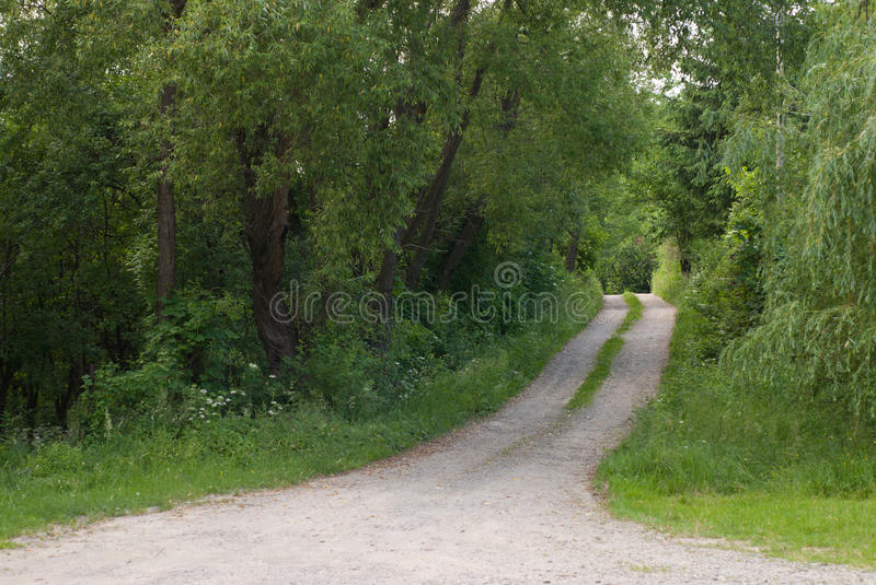 Download Forest trails stock image. Image of nature, path, trails - 25437253