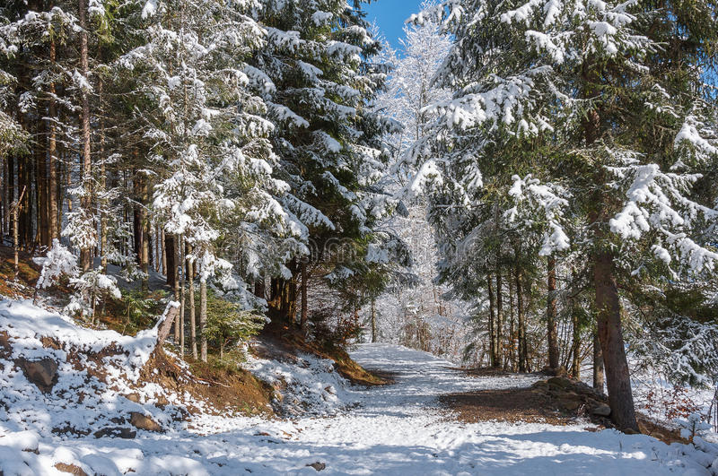 Forest Trails royalty free stock photography
