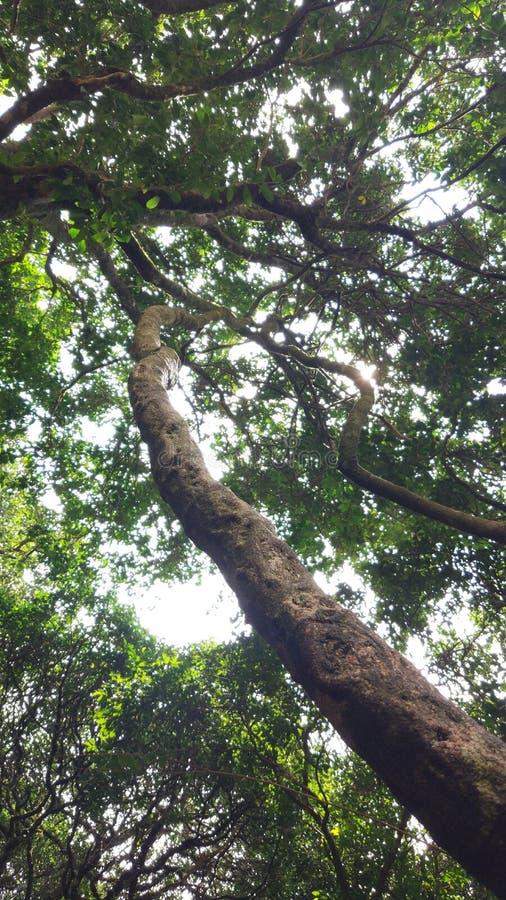 Forest Tree immagini stock libere da diritti