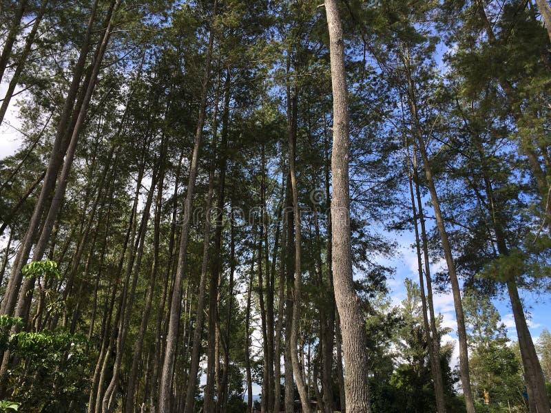 Forest Tree fotografie stock