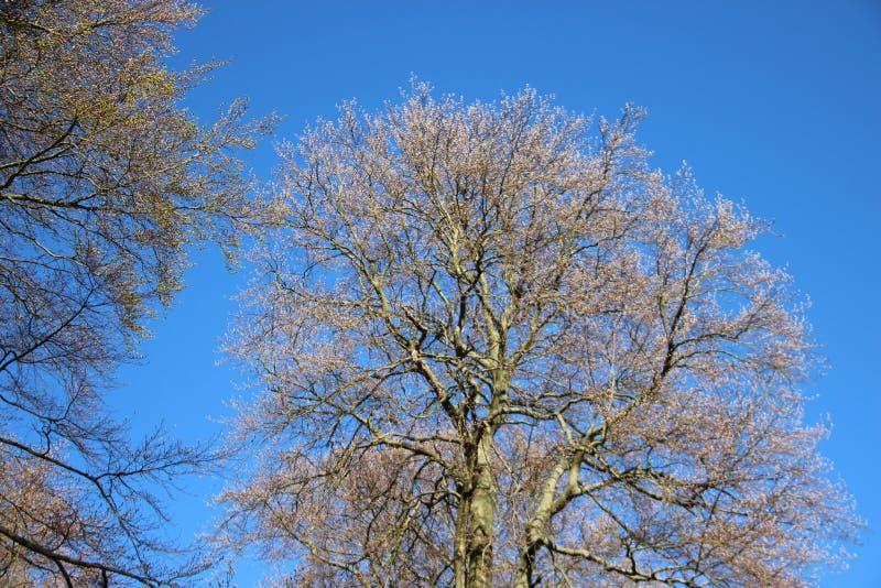 Forest Tree Budding Young Green lascia nella primavera immagine stock libera da diritti