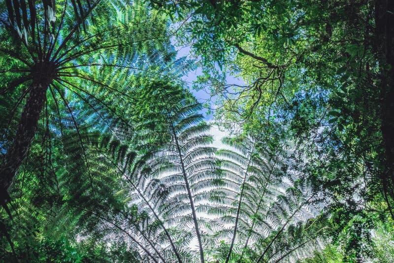 Forest Tree Canopy fotografie stock libere da diritti