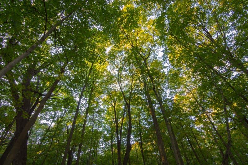 Forest Tree Foliage Northern Illinois fotografía de archivo