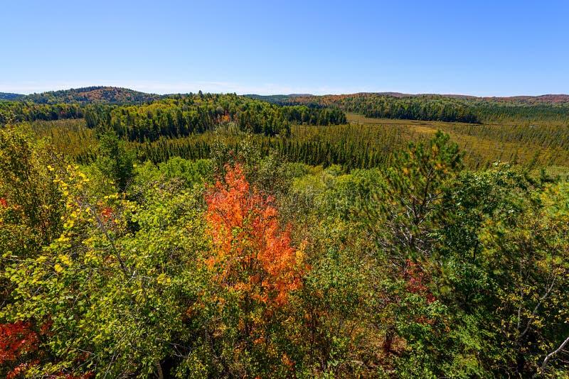 Forest Tree Tops in de Herfst - Brede Hoek royalty-vrije stock fotografie