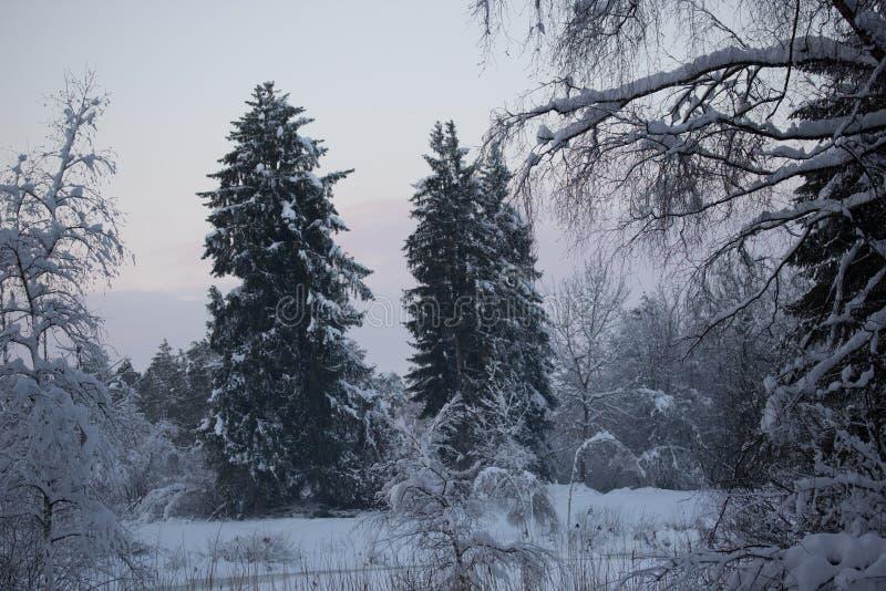 Forest Tree Winter Snow royalty-vrije stock fotografie