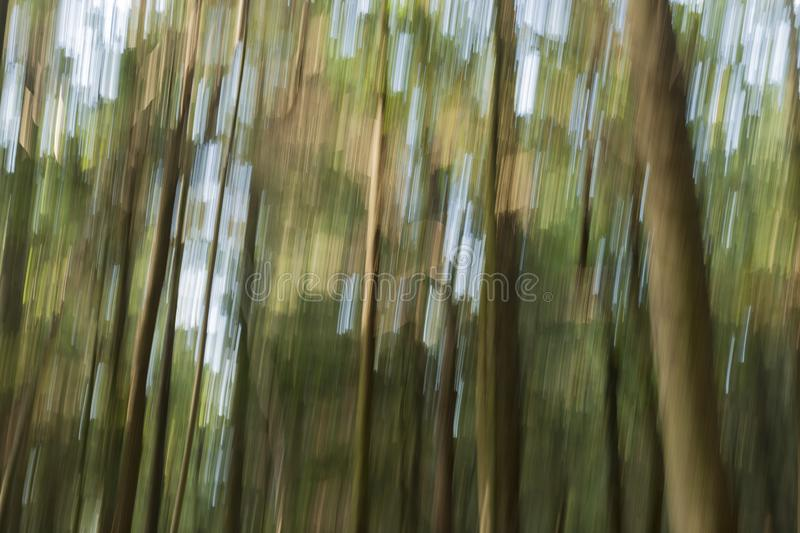 Forest and trees abstracted striped. Long exposure in the forest in an abstract appearance with horizontal movement of the camera in an abstract appearance royalty free stock image
