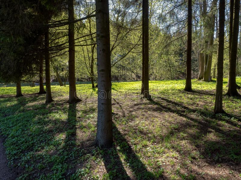 Forest trees backlit by sunlight stock image