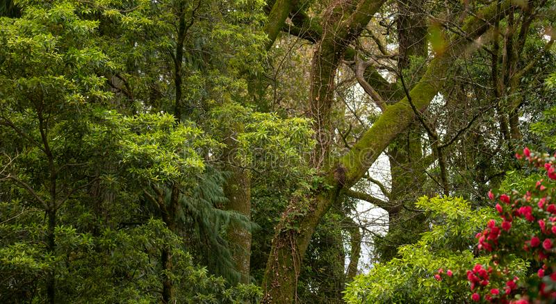 Forest Trees, Green Background. Forest Trees Banner, Green Background stock photography