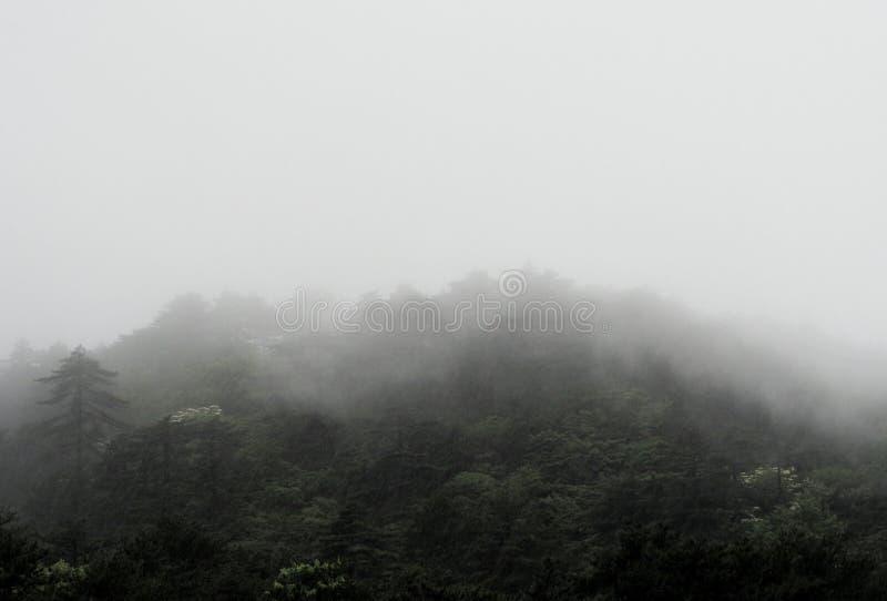 Forest Trees en brouillard lourd images libres de droits