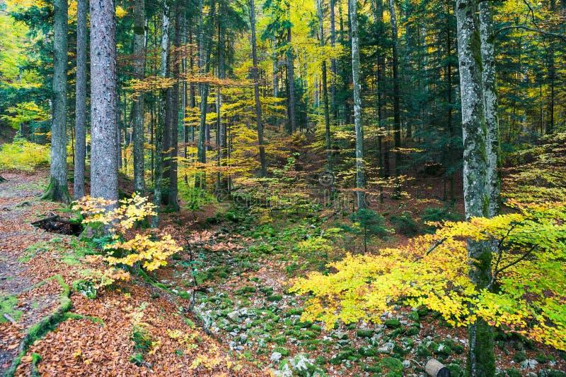 Forest Trees en Groen, Geel en Oranje Kreupelhoutgebladerte binnen stock foto's