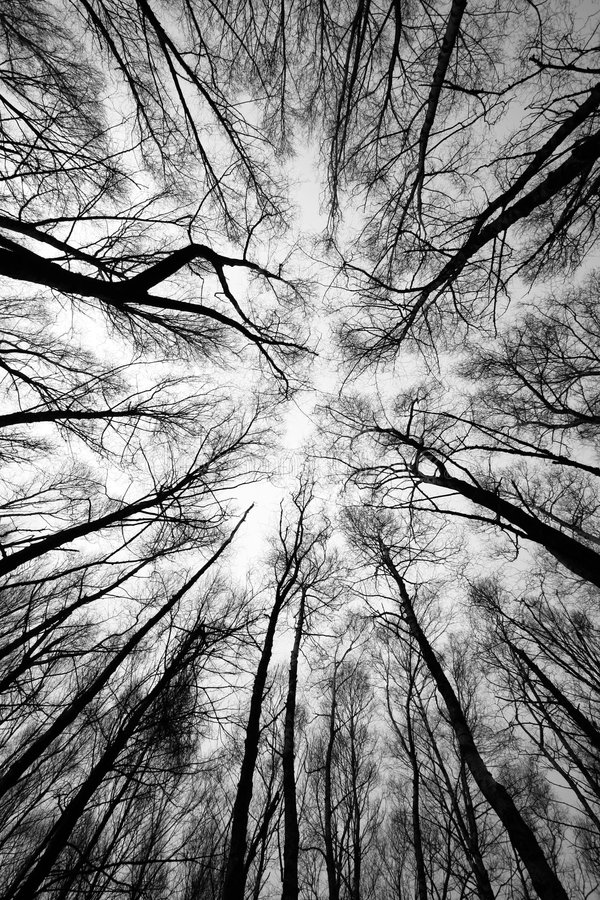 Forest trees after fire stock photography