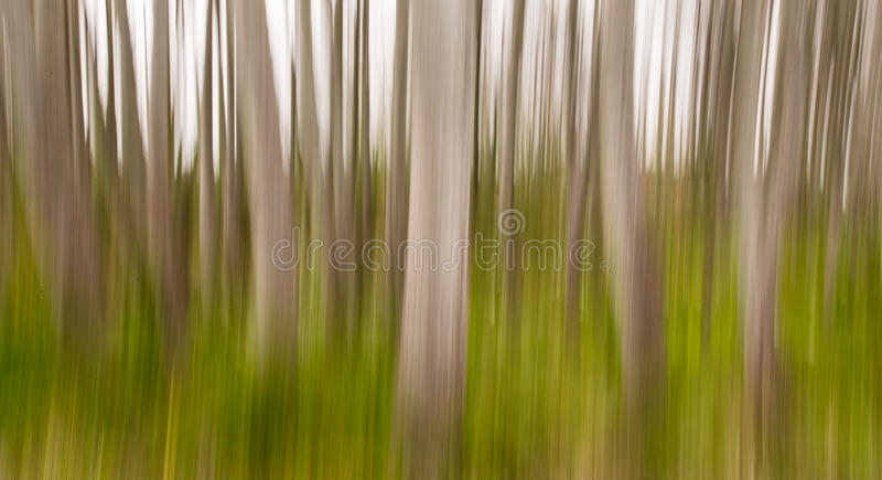 Forest. Trees in forest with green grass royalty free stock photo