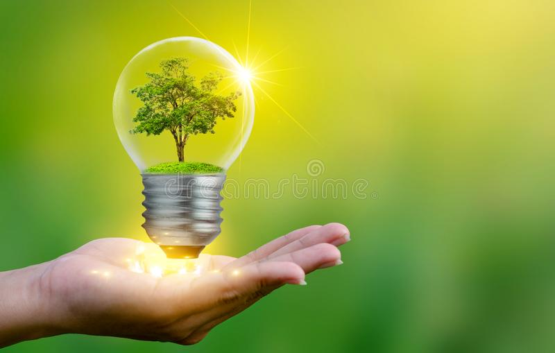 The forest and the trees are in the light. Concepts of environmental conservation and global warming plant growing inside lamp bul stock photo