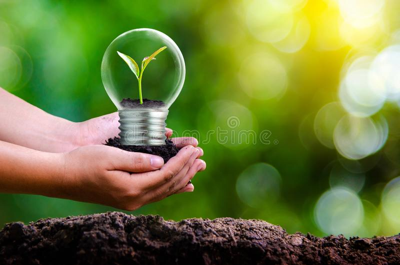 The forest and the trees are in the light. Concepts of environmental conservation and global warming plant growing inside lamp bul. B over dry soil in saving stock photos