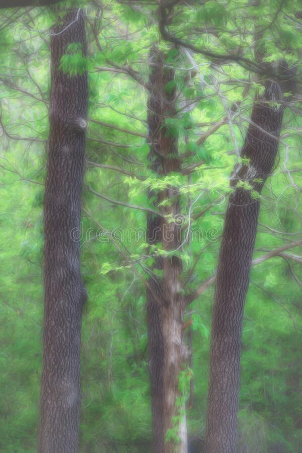 Trees Through a Foggy Mist royalty free stock images
