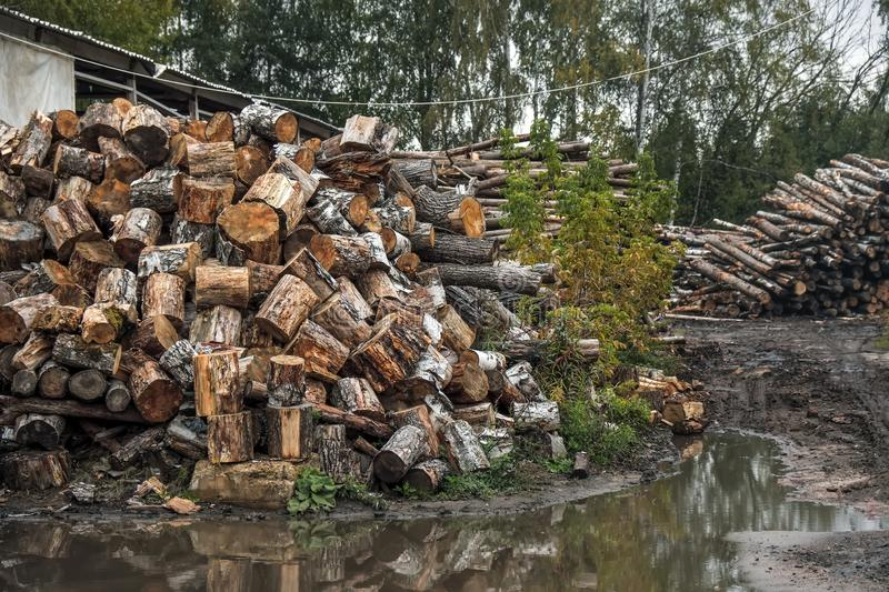 Forest trees log trunks felled by the logging timber industry. stock photography