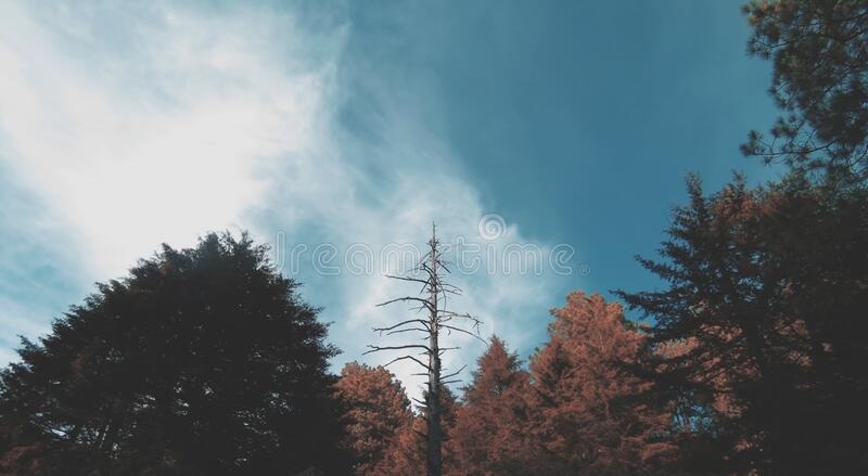 Forest trees stock photography