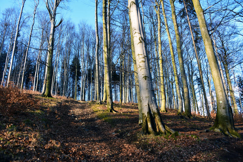 Forest and trees in national park. In sunny spring day stock photos